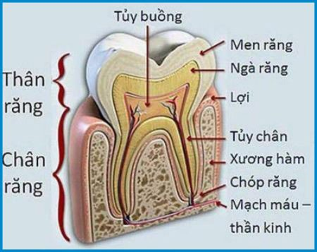 Răng đã lấy tủy có nên boc rang su tham my không?
